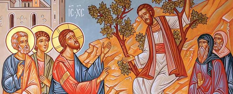 Zacchaeus climbs a tree to see Jesus.